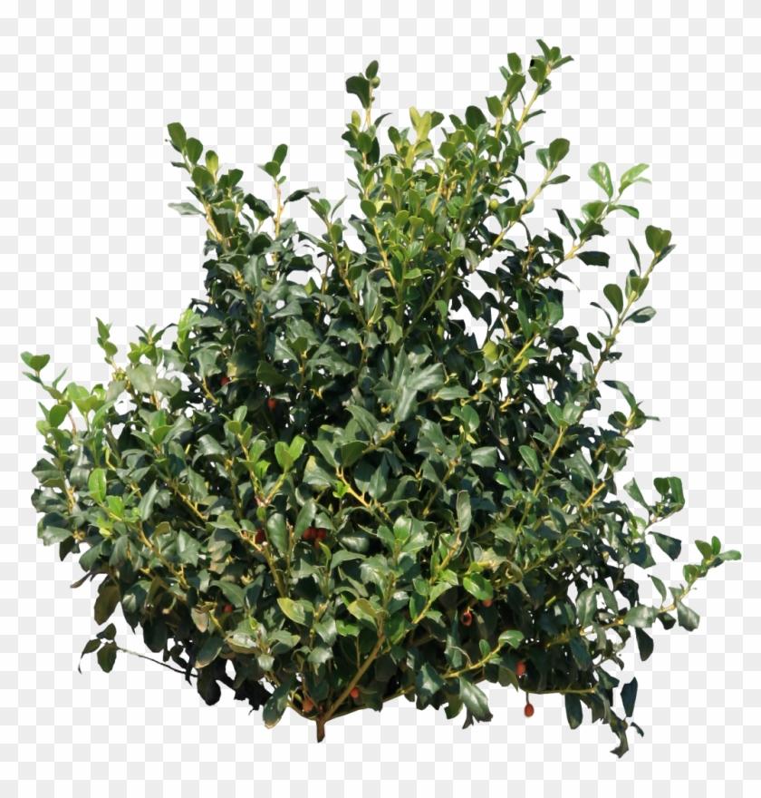 shrub clipart group tree bush png free transparent png