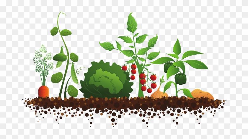 Plant Garden Clipart Vegetable Garden Illustration Free