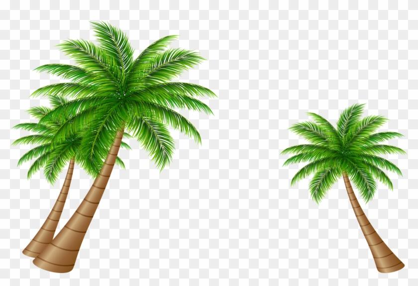Asymmetric Coconut Tree Vector - Coconut #383474