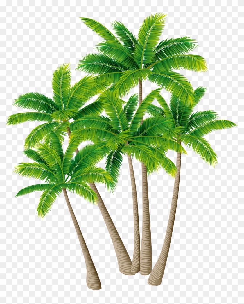 Coconut Tree Arecaceae Download - Coconut #383530