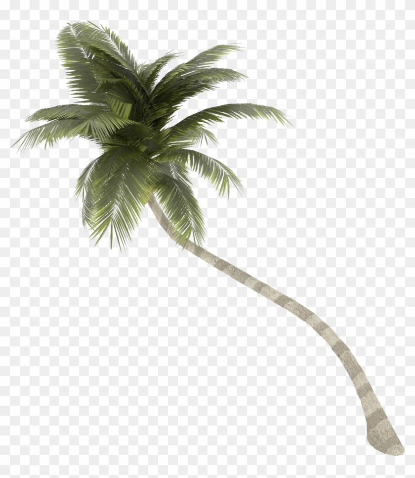 Coconut Tree Png Images Transparent Free Download - Palm
