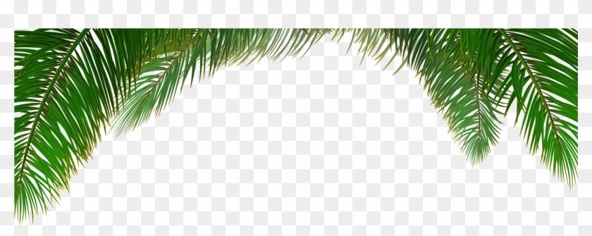 Arecaceae Tree Euclidean Vector Leaf - Palm Tree Background Vector #383668