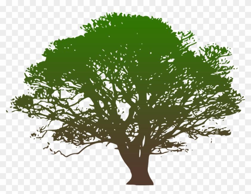 Clip Art Hickory Tree Service Westchester County Ny - Oak Tree Clip Art Black And White #383710