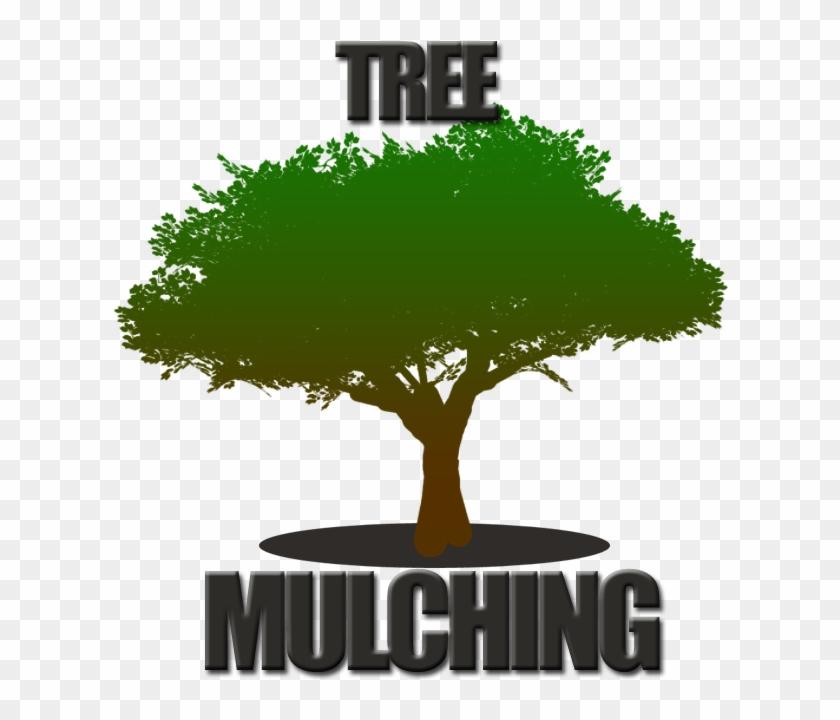 Tree Mulching Fort Worth - Very Nice Background #383716
