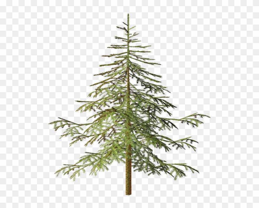 Spruce Tree Conifers Clip Art - Spruce Tree Conifers Clip Art #383856