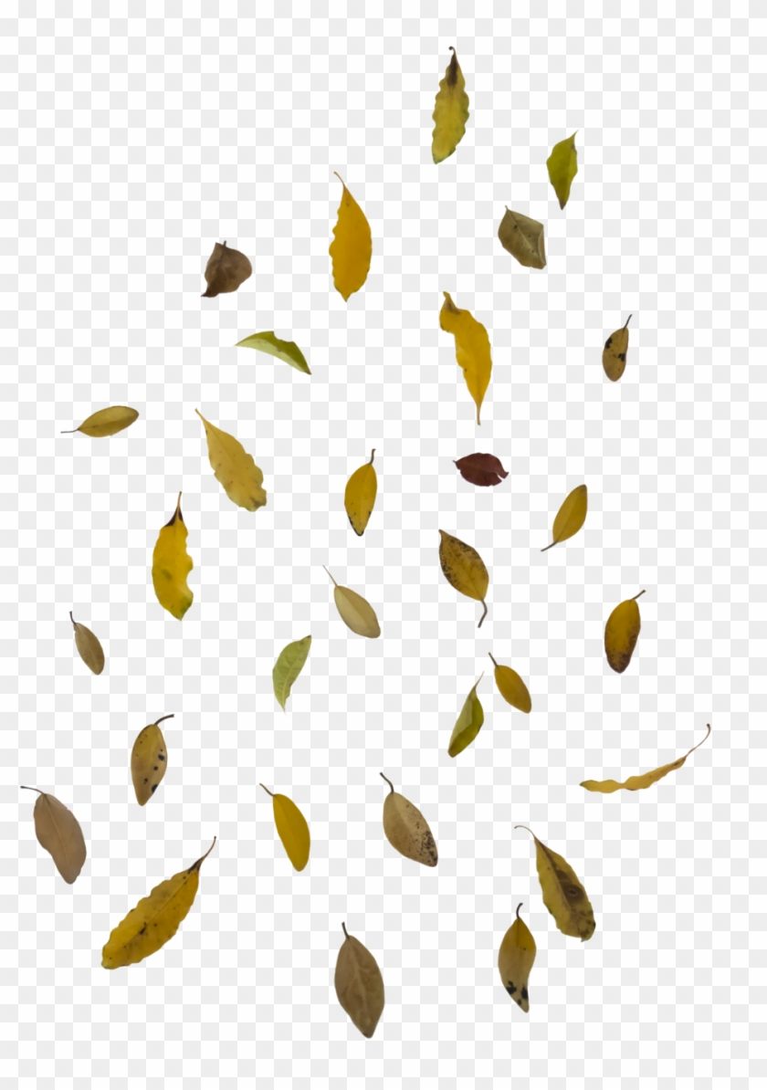 Falling Autumn Leaves Free Png Image - Falling Leaf Overlay Png #384332