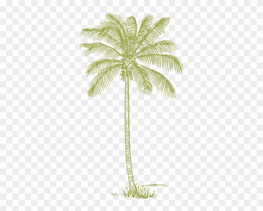 Green Palm Tree Png #384491