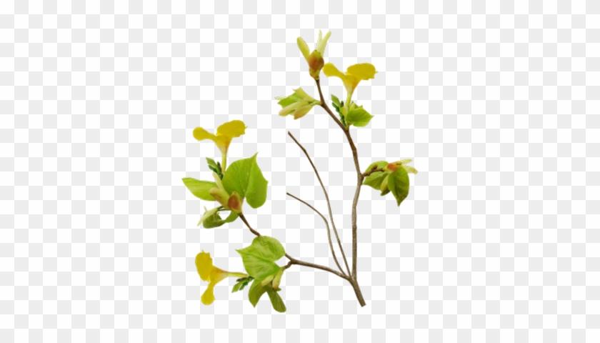Tree Branch Vector Png 나뭇가지의 Psd, Vector Graphics - Bird Nest On Branch Transparent #384692