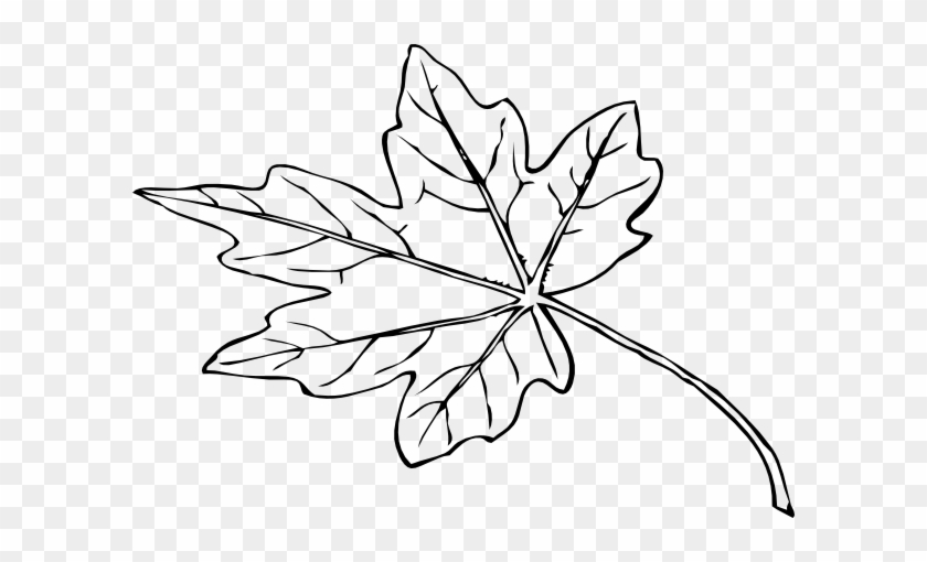 Leaf Outline Clip Art At Clipart Library - Maple Leaf Drawing Png #384805