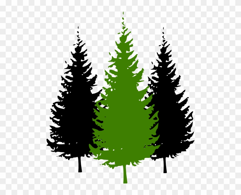 Redwood Tree Drawing With Roots For Kids - Pine Tree Silhouette #385108