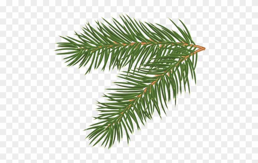 Free Realistic Pine Tree Branch Vector 1118 - Pine Tree Branch #385144