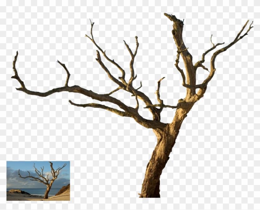 Dead Tree - Dead Tree Isolated #385550