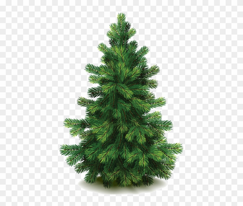 Buy Pine Tree By On Graphicriver - Nordmann Fir Christmas Trees #385657