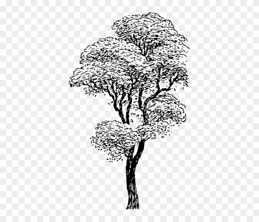 4 Winter Tree Images - Spooky! | Clip art vintage, Winter trees, Graphics  fairy