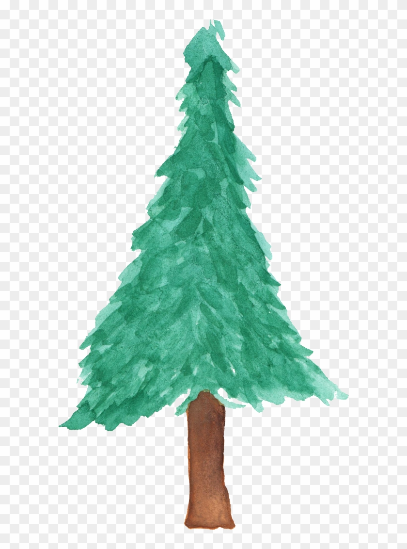 Free Download - Pine Tree Watercolor Transparent #385674