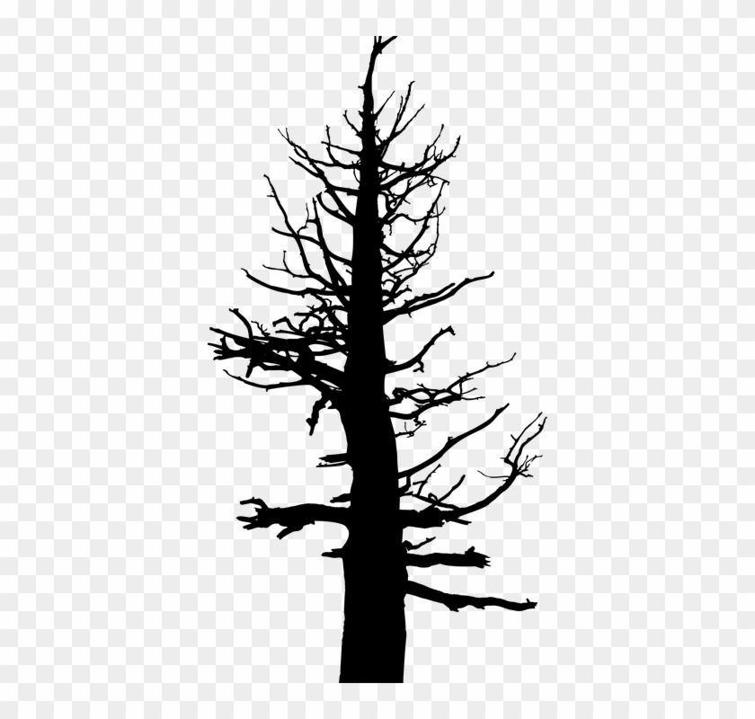Dead Tree Cartoon 13, Buy Clip Art - Old Dead Pine Tree #385713