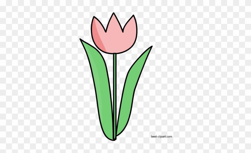 Free Tulip Clip Art - Tulip #61176