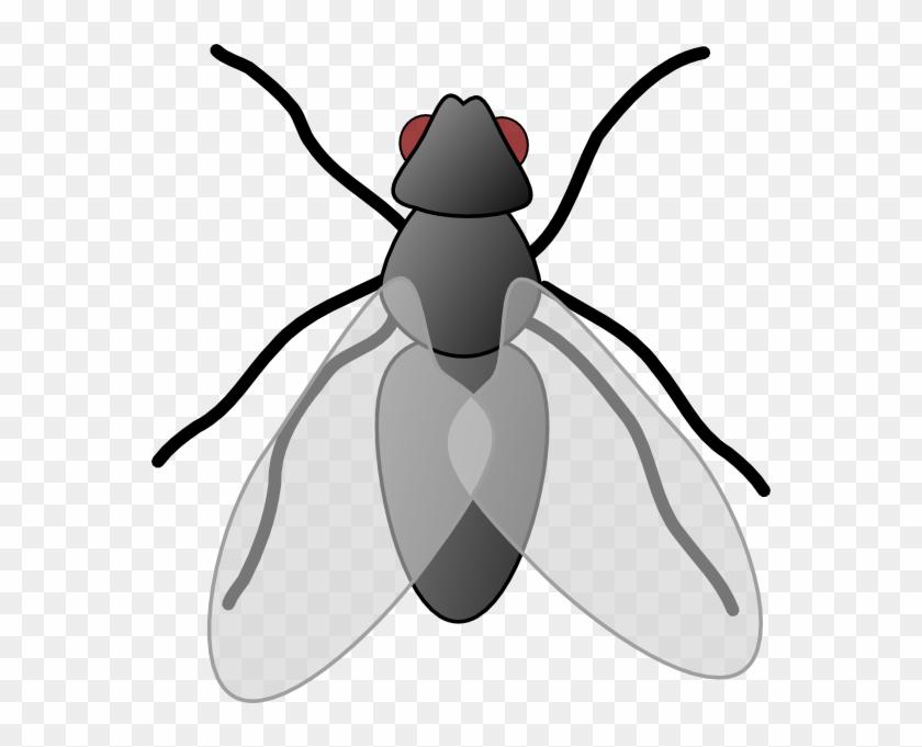 Flies Clipart - Flies Clip Art #61998