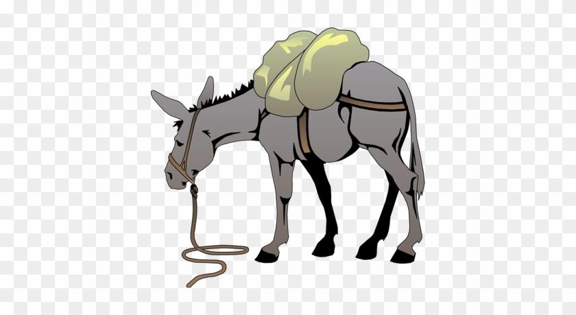 Donkey Clip Art #62371