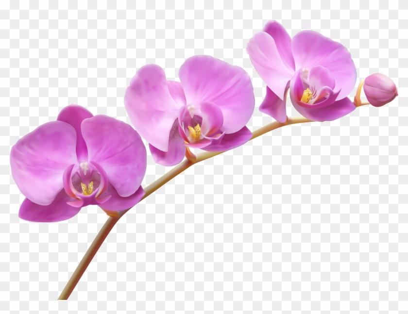 Orchids Transparent Png Clip Art Image - Orchid Png #62837