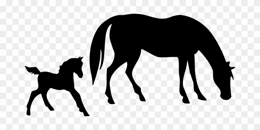 Animals Horse Mare Foal Broodmare Animal S - Horse Silhouette #63071