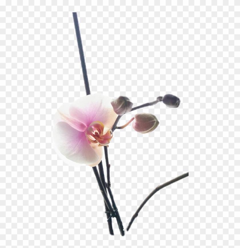 Orchids #63169