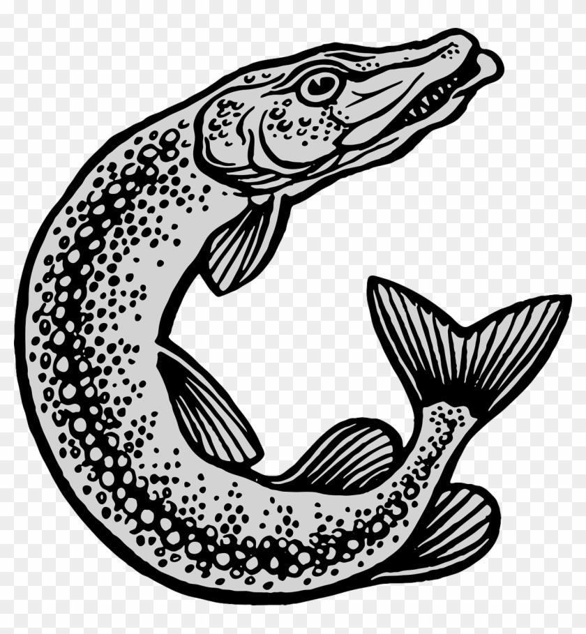 Fish And Fishing Equipment #63315