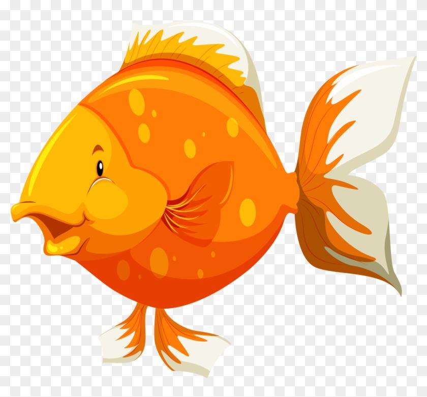 Яндекс - Фотки - Parts Of Fish #63363
