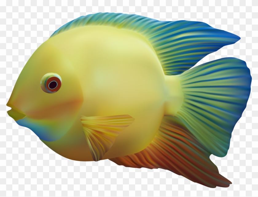 Fish Png - Fish Png #63604