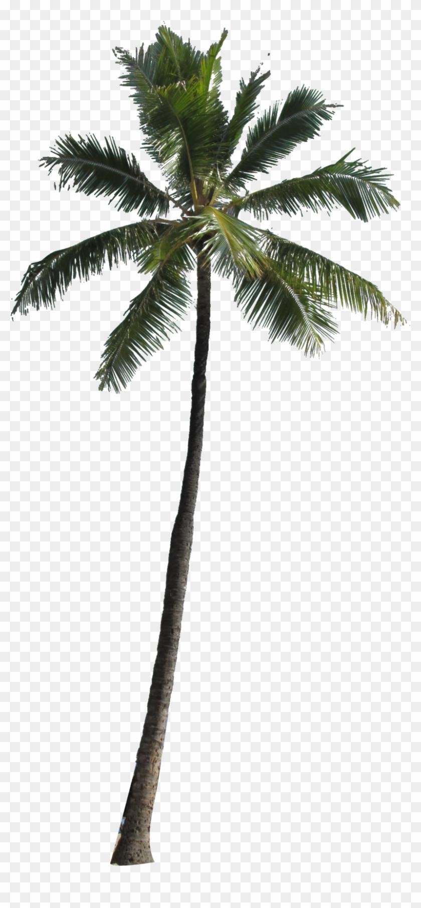 Arecaceae Tree Clip Art - Coconut Tree For Photoshop #387542