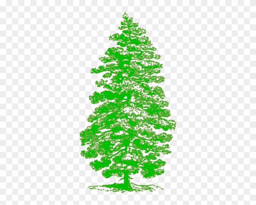 Tattoo Free Oak Tree Clip Art - Parts Of A Pine Tree #387587