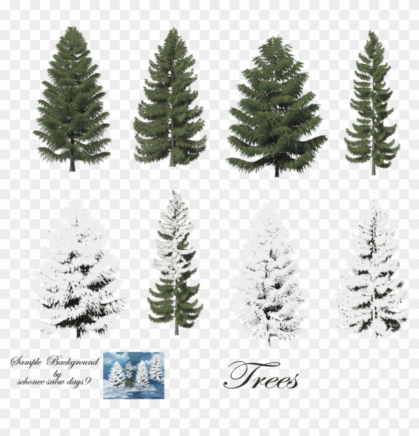 Fir-tree - Trees With Snow Photoshop #387956
