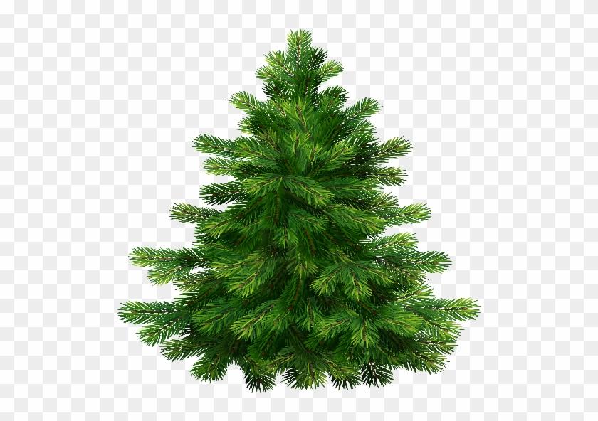 29 Jan 2015 - Pine Tree Transparent Background #387976