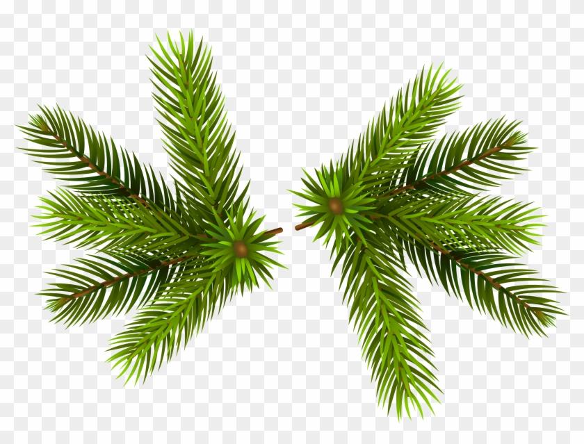 Christmas Branch Png.Pine Clipart Transparent Christmas Pine Transparent