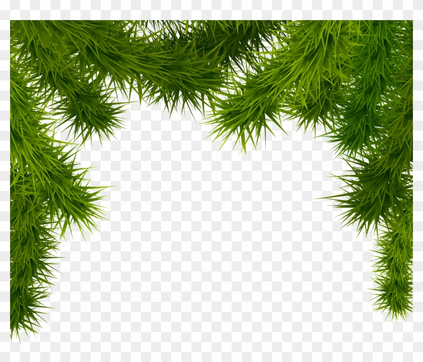 pine branches png clipart image christmas tree branches transparent - Christmas Tree Branches