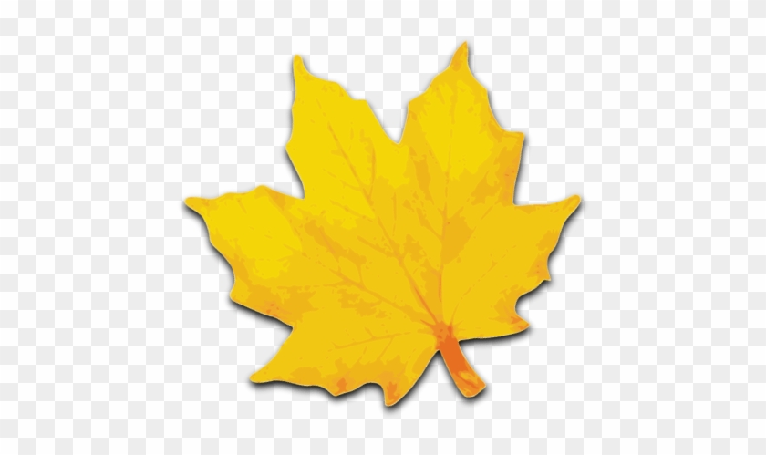 Free Yellow Leaves Clip Art - Yellow Maple Leaf Clip Art #388426
