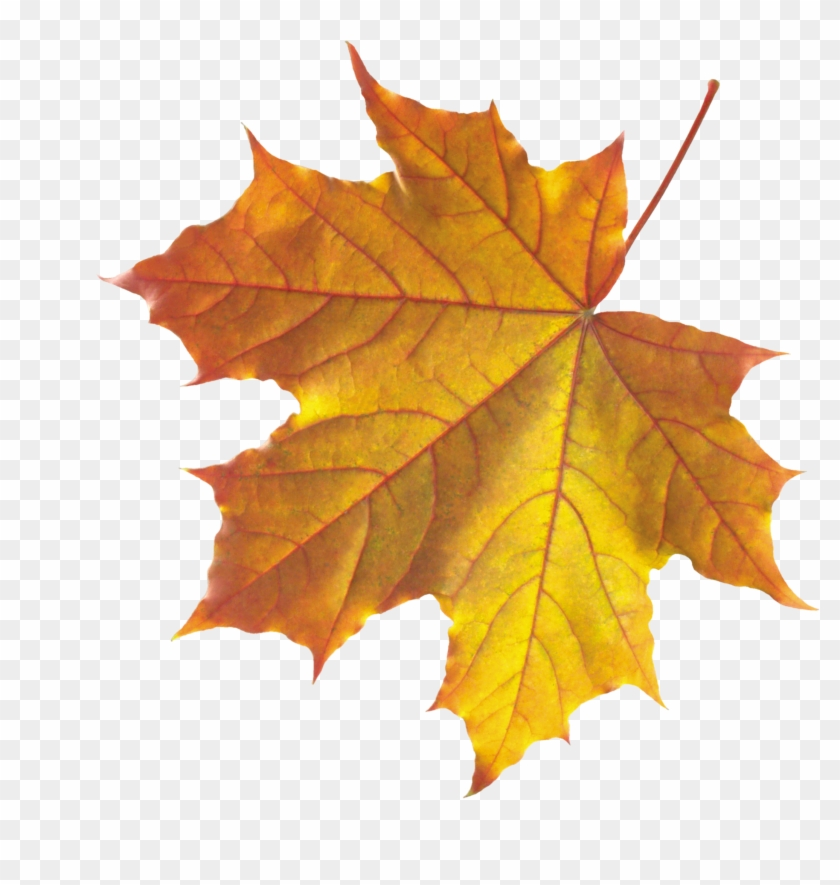 Png Leaf - Autumn Fall Leaves Png #388429