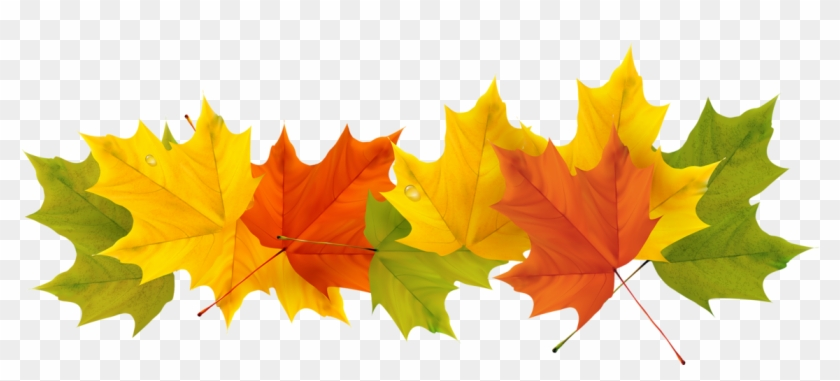 Fall Leaves Clip Art Transparent #388458