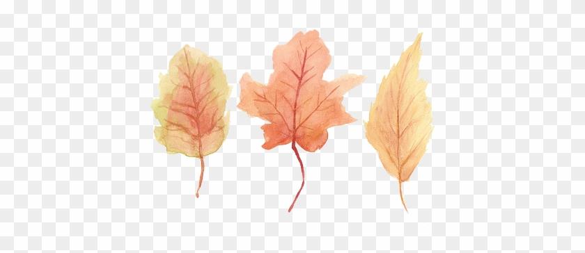Autumn Leaves Drawing Tumblr - Maple Leaf #388997