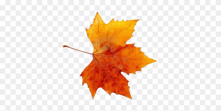 Autumn Png By Vanessarebelangel On Deviantart - Fall Maple Leaf Png #389047