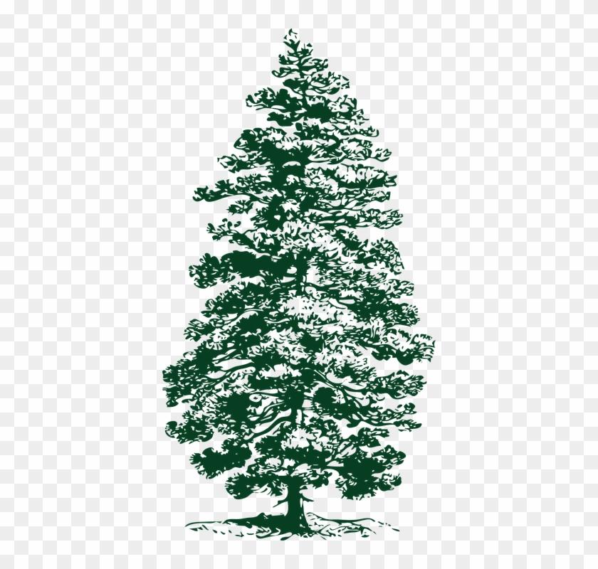 Fir Tree Png 13, Buy Clip Art - Pine Tree Clip Art #390042