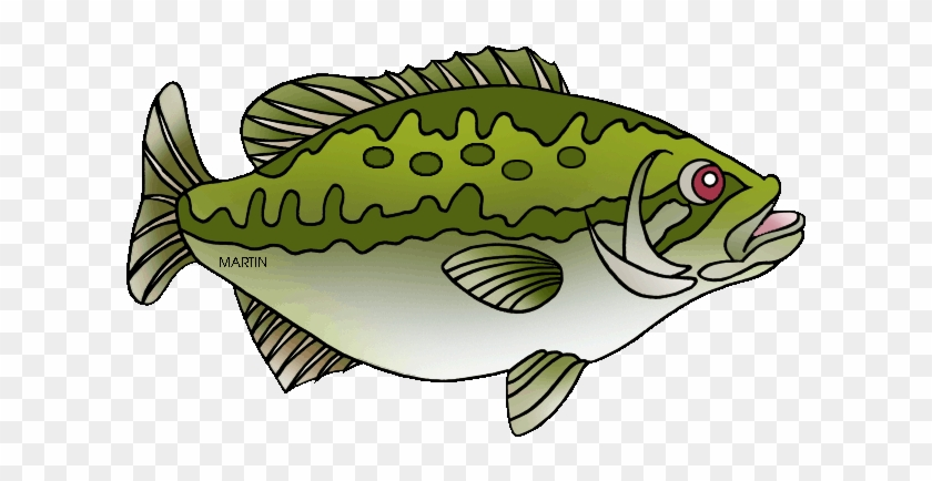 Free Largemouth Bass Drawing Outline Sea Bass Clip Art Free