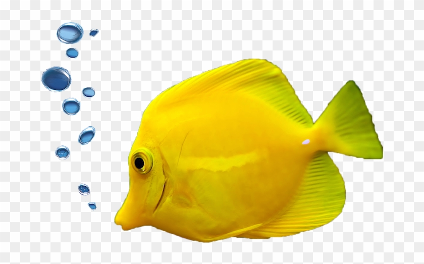 Scuba Diving Packages - Fish With Bubbles Png #390457