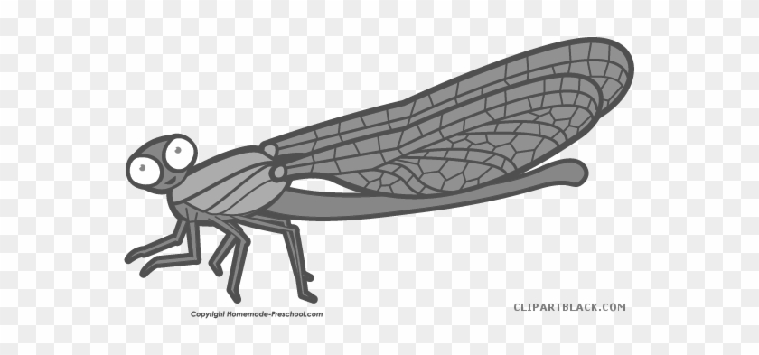 Amazing Dragonfly Animal Free Black White Clipart Images - Net-winged Insects #390693