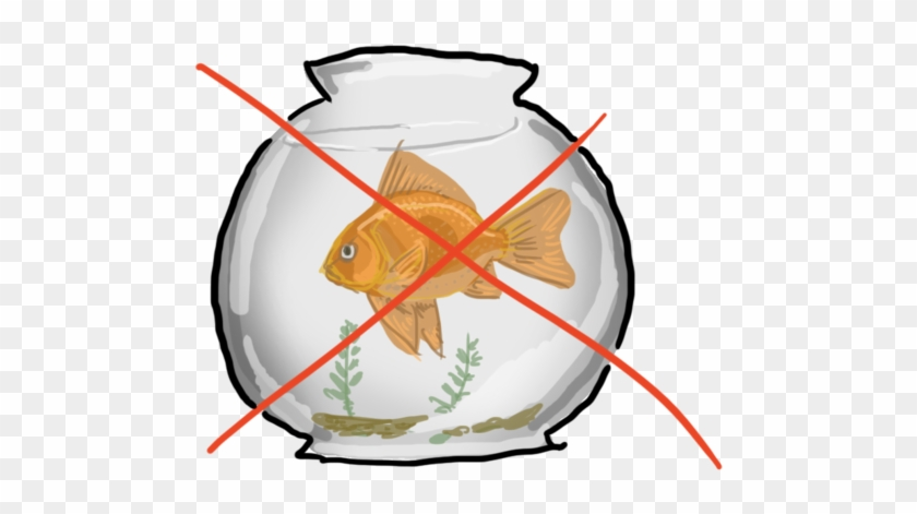 Goldfish Clipart Orange Things - Gold Fish In A Bowl #393137