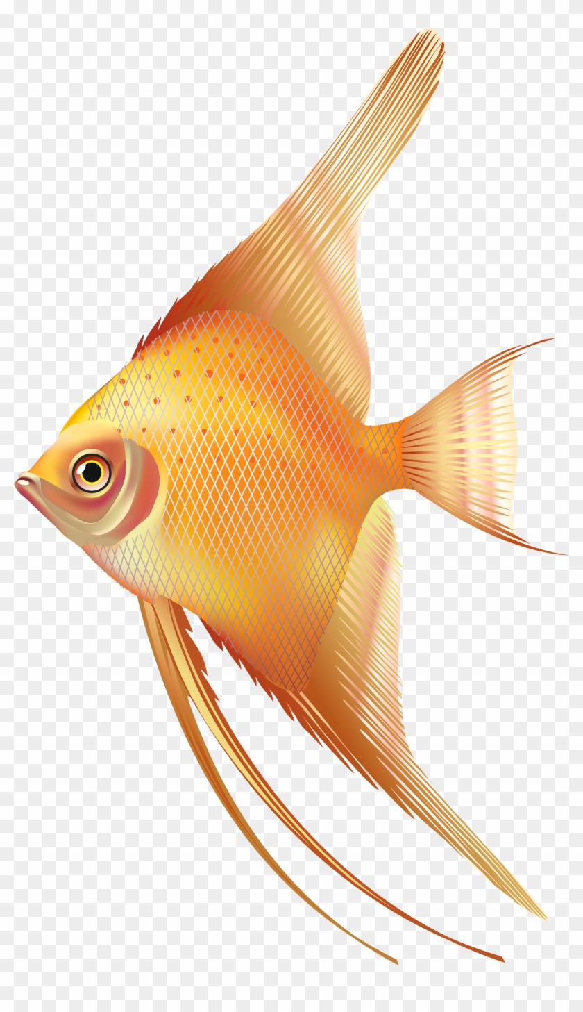 Nice Exotic Fish Png Clipart Fresh Water Aquarium Fish Png Free