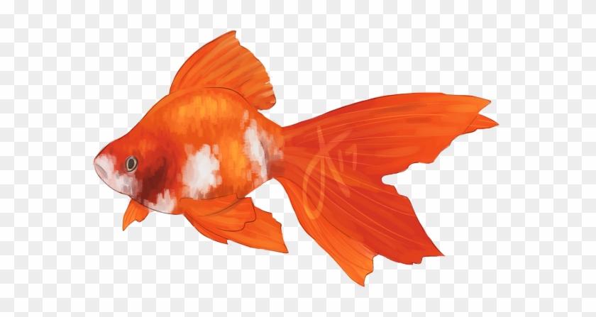 $10 Fish Commissions - Goldfish #394274