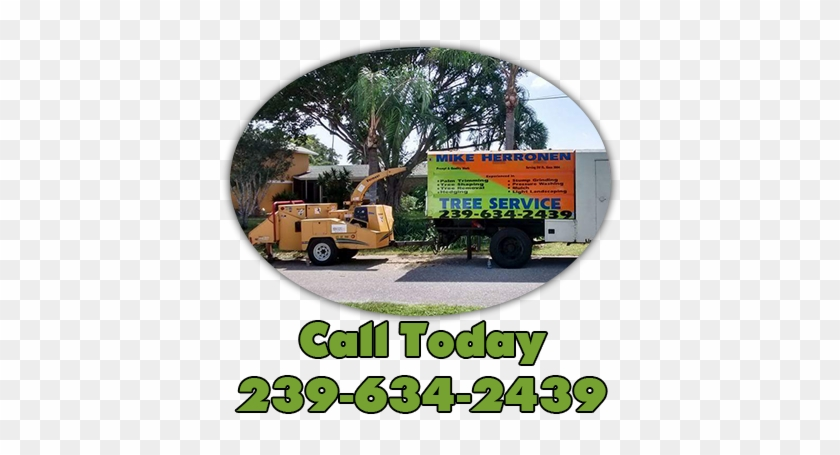 Tree Service Cape Coral Specializes In Grinding Any - Sw Fl Tree Service #395060