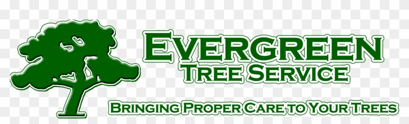 Evergreen Tree Service Mobile Alabama - Evergreen Tree Service #395070
