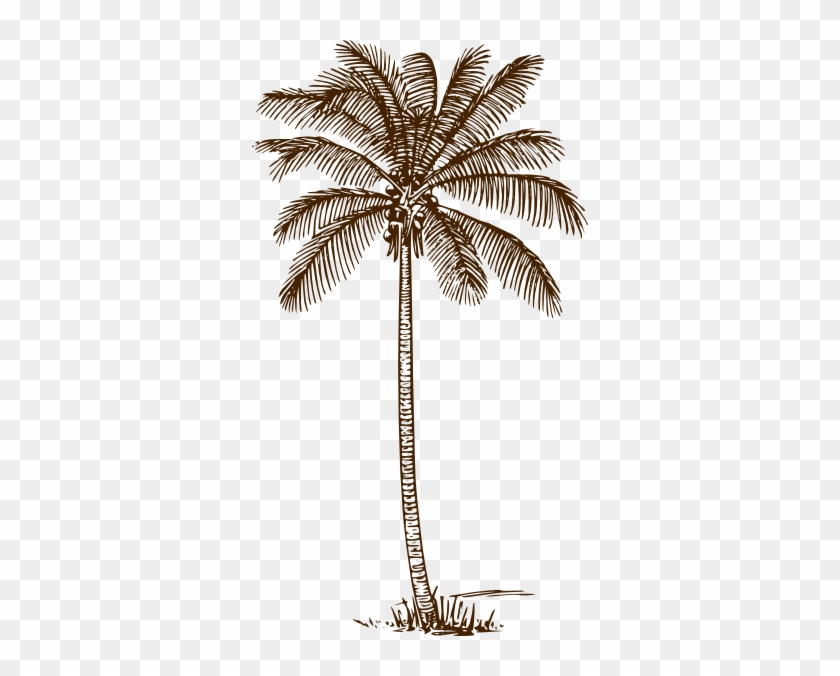 Palm Tree Clip Art At Clker - Palm Tree Line Drawing #396859